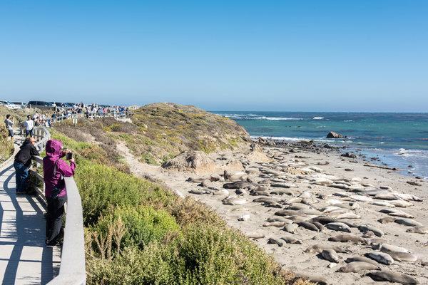 彼德拉斯布蘭卡斯角附近一處海灘上的象海豹。