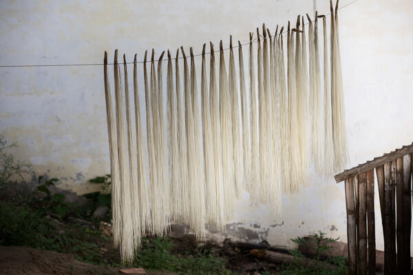 晾乾的稻草。為了做好編織的準備,需要將稻草輕輕煮沸大約一分鐘,然後讓它在露天晾乾一夜。