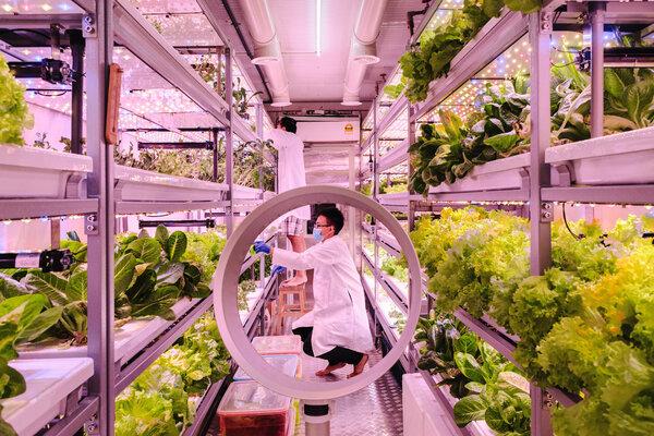 馬來西亞吉隆坡的蔬菜公司在集裝箱LED燈的照射下培育蔬菜。「我們是一個不確定的市場中的新產品,」創始人之一說。