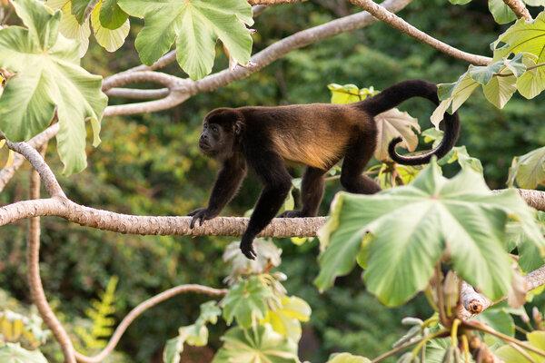 曼努埃爾安東尼奧是哥斯達黎加中部面對太平洋的一個海邊村莊。附近同名的國家公園生活著豐富的野生動物。