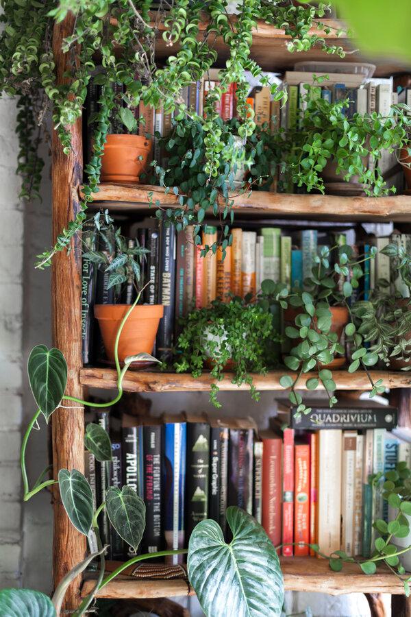 雷恩·奧克斯在紐約布魯克林的公寓,到處都是綠植。