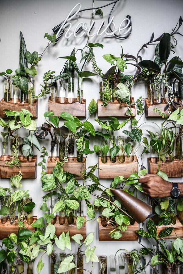 卡特家裡有一個繁殖區,有掛在牆上的木製搖籃,裡面裝著放著插條的試管。