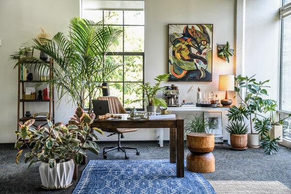 植物設計師和室內設計師希爾頓·卡特在辦公室裡擺放了各種各樣的植物,包括掛在牆上的鹿角蕨。
